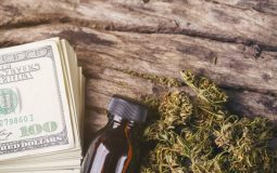 dried medical marijuana with CBD THC extract and dollar bill
