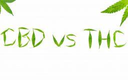 Différence CBD et Cannabis
